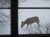 deer outside our window