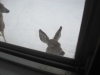 deer looking in my window!