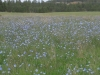wildflower field near Hot Springs