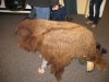 headless-buffalo-lol-wonderful-science-program-for-kids-at-wind-cave