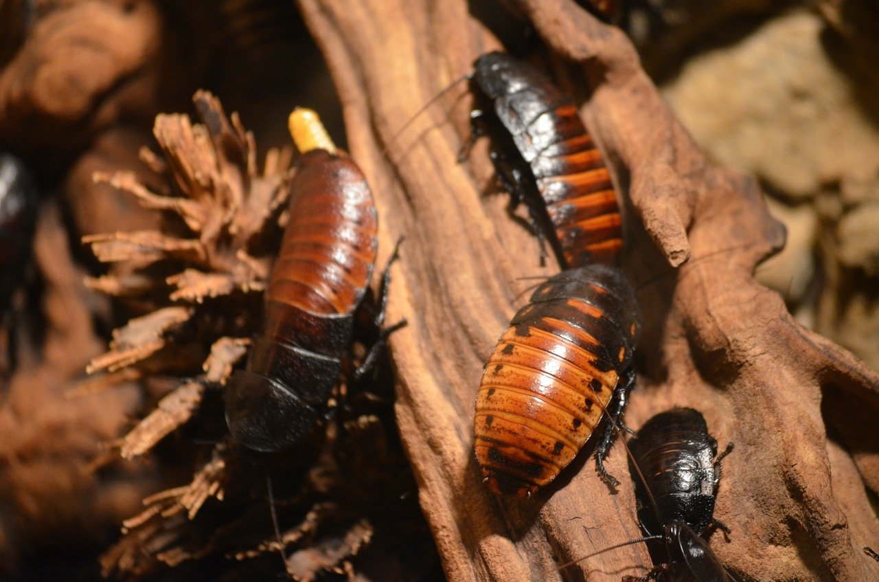 cockroaches-215544_1280